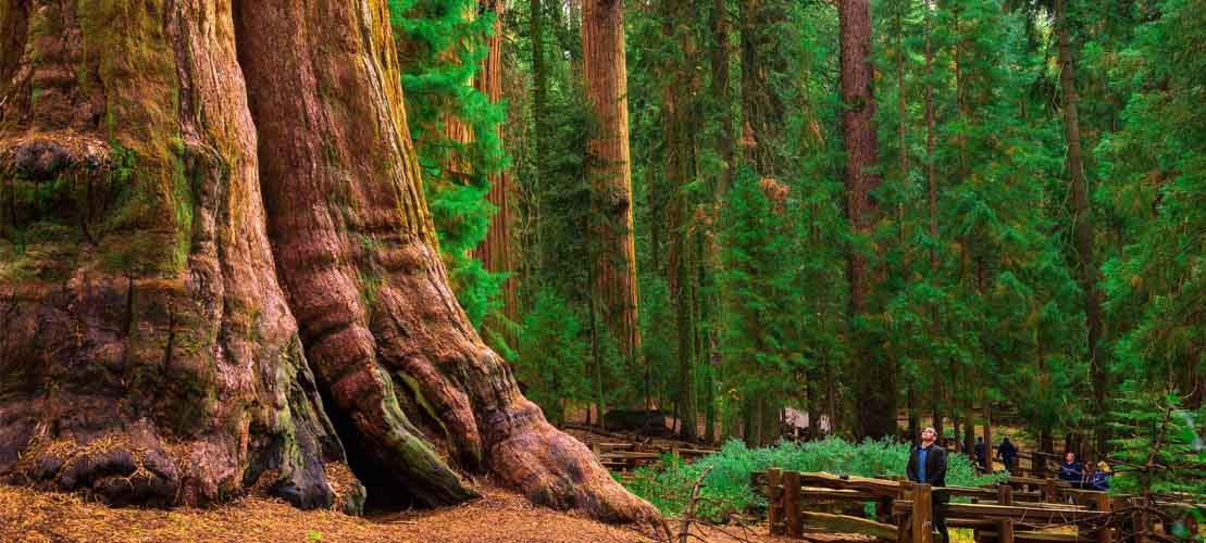 All Green Recycling Redwoods for Red Wine